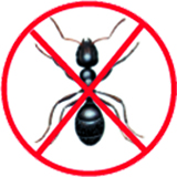 Solution anti fourmis marrakech